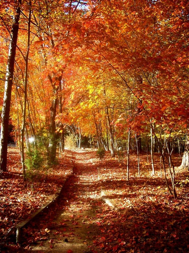 Rome Wheather Autumn in Rome